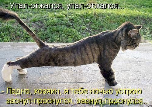 (+1) КВН - Коты Веселые и Находчивые