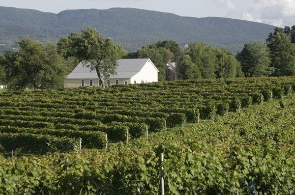 Vignoble Domaine Bresee à Sutton.