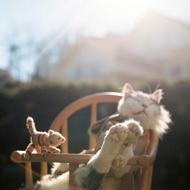 by emir özşahinLike A Boss, Sleepy Kitty, Enjoy Life, Lazy Sunday, Cat Naps, Sunny Day, Sunday Afternoon, High Chairs, Animal