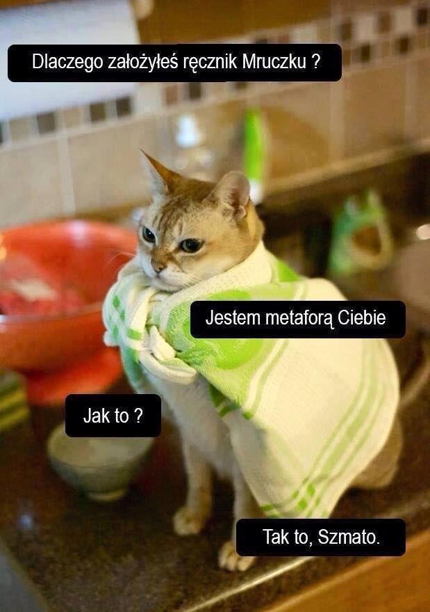 Koty, śmieszne