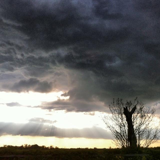 #storm #tree