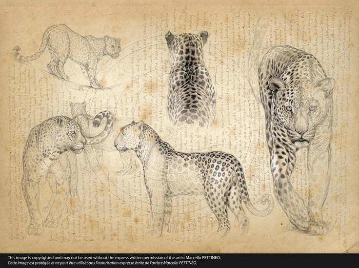 Line Drawing Artists Names : Best drawing images sketches drawings and