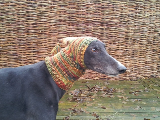 Just bought one of these Greyhound Pixie Hat. £12.00, via Etsy after an extremely cold day on the beach yesterday in which lily had to borrow my scarf