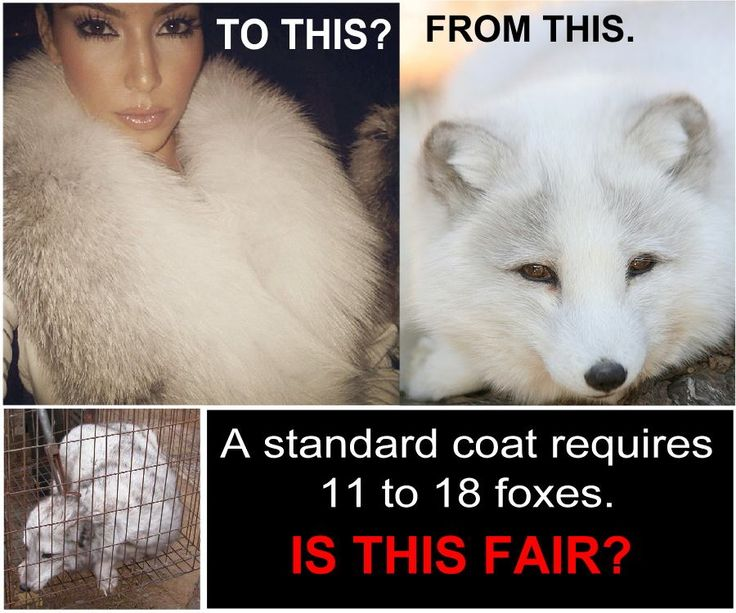 I will never wear fur. I will never buy real leather. There is no point in killing helpless animals for fashion, when we have the ability to get the same look with synthetics. No need for this violence on animals so we look good!