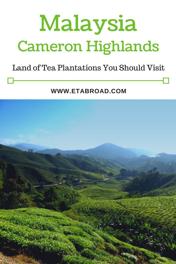 Valley of Cameron Highlands is characterized by lower temperature. As far as the eye can see are tea plantations. Come with us to taste this delicious tea.