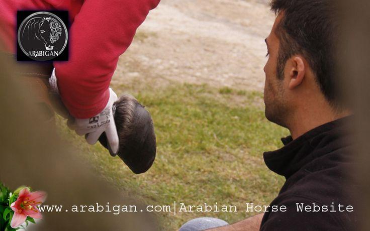 El balance F del pie del caballo descalzo o barefoot