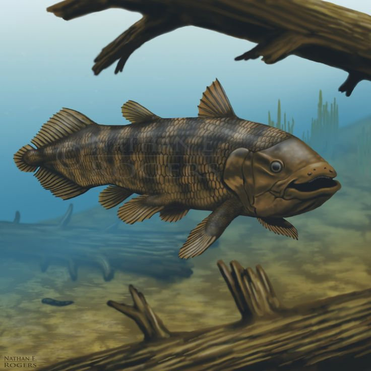 fish as old as dinosaurs discovered That it's a fish so old that it is more closely related to mammals than to other fish  we basically discovered that dinosaurs are still alive in one small area.