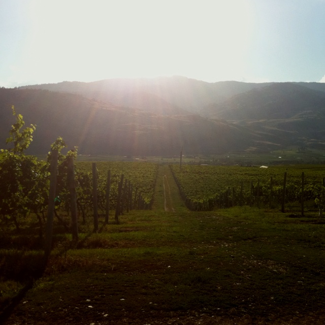 Black Sage Bench, Oliver, BC: Wine Capital of Canada