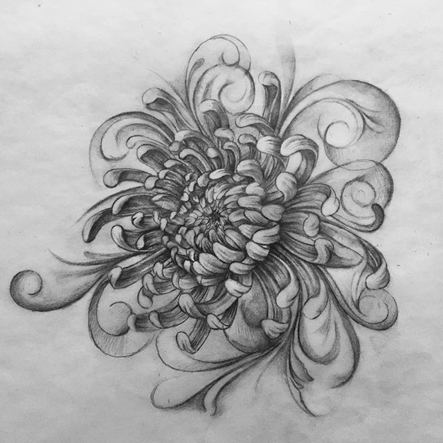 Chrysanthemum tattoo design. I kept the the style of follower with filigree, hoping I can add a series of successful art works into my portfolio #yilinzhu #chrysanthemumtattoo #tattoodesign #chrysanthemum #filigree