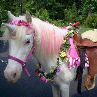 Unicorn ponies | Horses and ponies dressed as unicorns - Fancy Dress Friday
