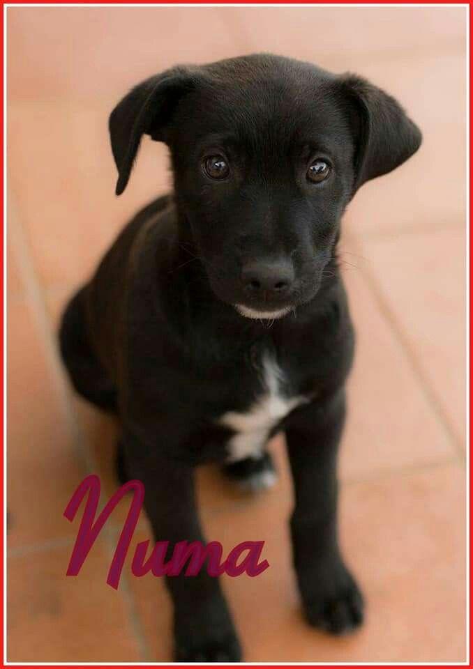 RT ADOZIONExNUMA,3 MESIHa perso un'adozione perché una veterinaria ha consigliato la famiglia di non prendere cani dal sud!!3 mesi,mamma labrador, vaccinato e con microfochip, raggiunge tutta Italia previ controlli, aiutatemi a condividere....Info 3334105289