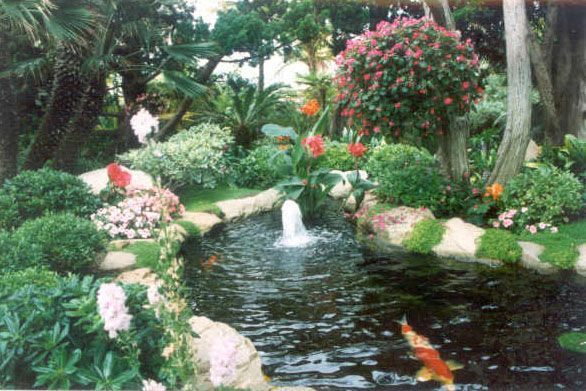 1000 images about landscaping on pinterest for Coy fish pond maintenance