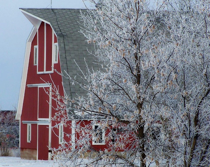 Beautiful Red Maple Trees wallpapers 52685 1920x1200 1 as well 6241004166 as well Stone 20barn  20red 20corrugated 20roof 20opp 20view moreover 32461554 further Red Cartoon Barn. on red barn