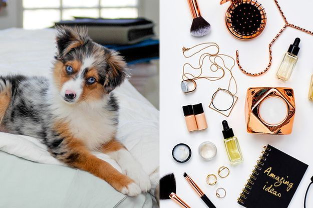 Pick Out Some Makeup And We'll Tell You Which Pet To Adopt