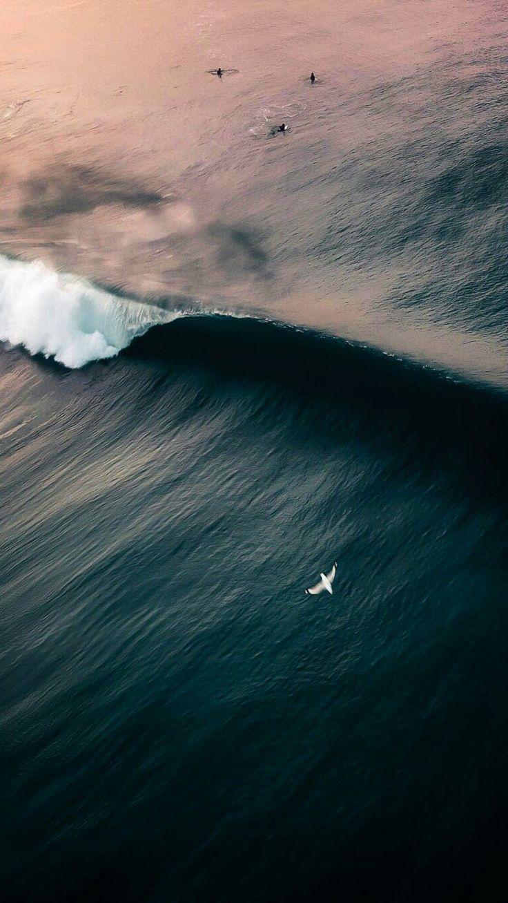 Under The Ocean Photography Under Ocean Photography Unter Dem Ozean Fotografie Sous La Photographie Oceanique Bajo La Fotografia Del Oceano Ocean Pho In 2020