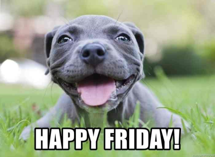 Happy Friday Memes That Ll Make Your Weekend Pitbull Puppies Pitbulls Happy Dogs