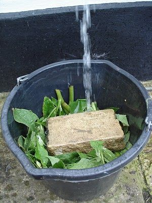 How to make liquid fertilizer from Comfrey.  This can be a liquid miracle, depending on how you use it.
