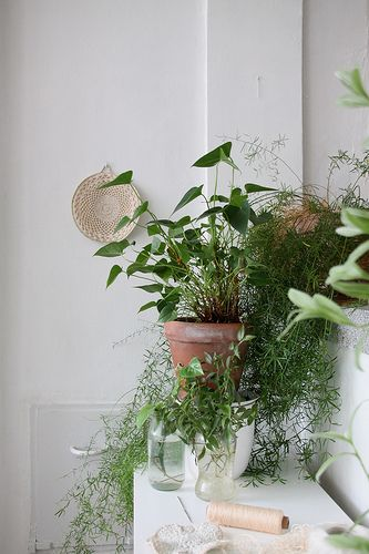 Happy plants bathroom garden indoor plants pinterest for Planta tropical interior