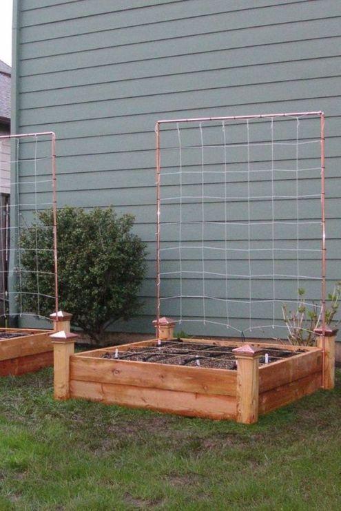 cultivarea legumelor