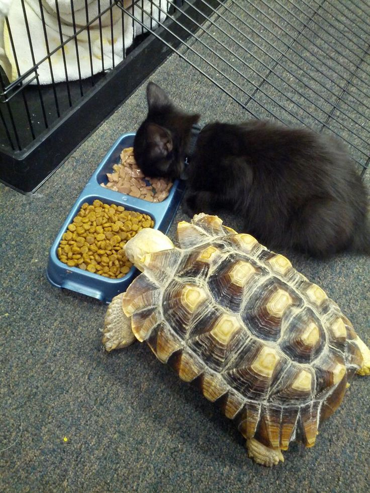 What Can You Feed A Kitten Besides Cat Food