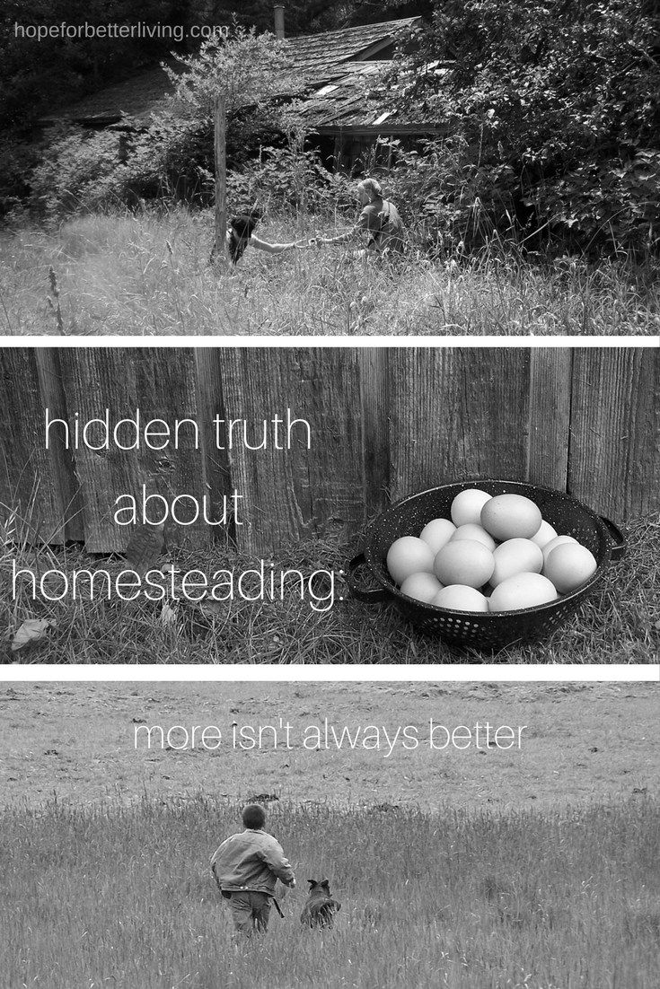Struggling to add more to your homesteading lifestyle? Consider this before you tag one more thing onto you to-do/to-learn list!