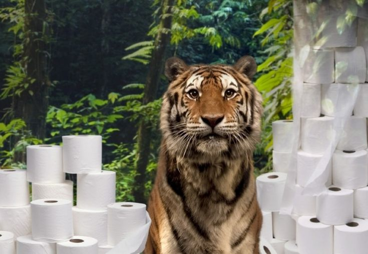 Don't Flush Tiger Forests; Credit: © World Wildlife Fund - See more at: http://www.earthtimes.org/conservation/wwf-report-links-sumatra-deforestation-toilet-paper/1817/#sthash.n9c2hf86.dpuf