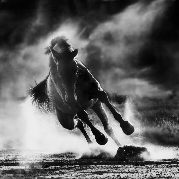 Thunder by awphototales. I love watching horses run.....beautiful.