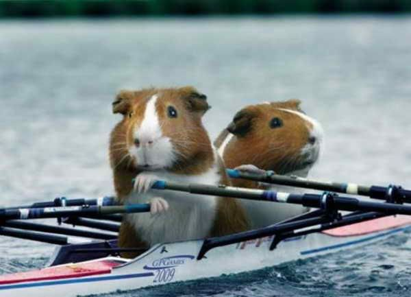 Mouse Rowing at the Olympics