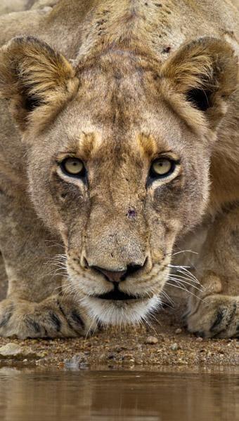 Jamie Thom photography - Amazing.  www.jamiethomsafaris.com