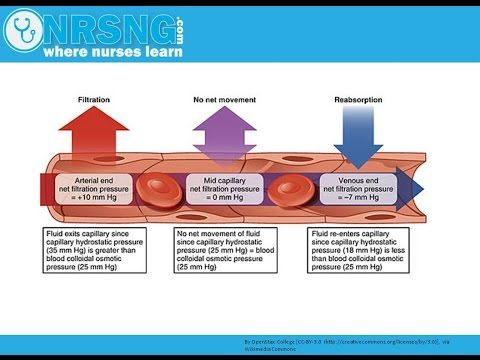 Hydrostatic vs Oncotic Pressure   Osmosis, albumin, fluid management, edema - YouTube