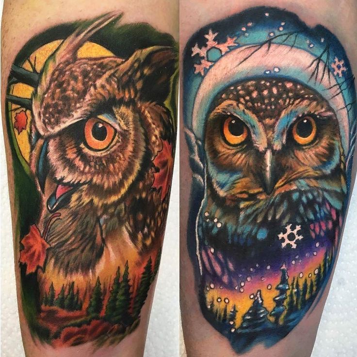 757 best images about Owl Love on Pinterest | David hale ...