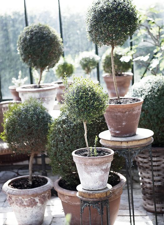 Myrtus // Picture from the famous swedish gardener Victoria Skoglunds new book. http://blog.leila.se/victoriaskoglund/