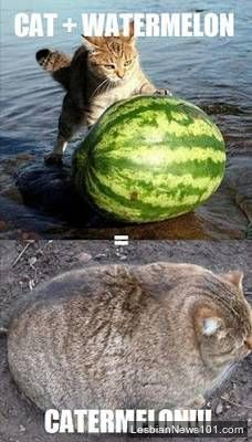 Fusion Of Cat And Watermelon - Funny Memes | Fun Things To Do When Bored http://funthingstodowhenbored.com/funny/fusion-of-cat-and-watermelon-funny-memes