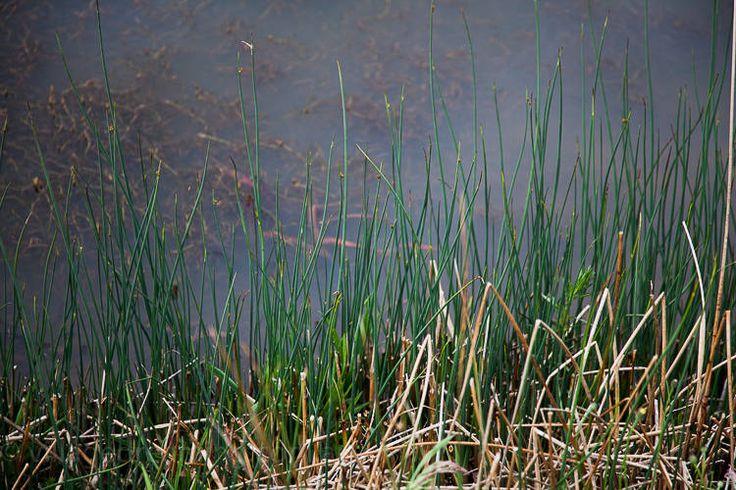 wetland detail (13 of 14)