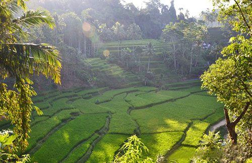 Yuk, nikmati pemandangan nan eksotis Gunung Galunggung dan desa adat Kampung Naga. Semua ada di one day trip Tasikmalaya - Galunggung, hanya Rp270.000 #panoramagroup