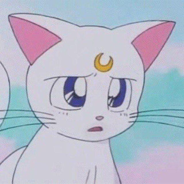 Надписью красивые, картинки с сейлормун и котом
