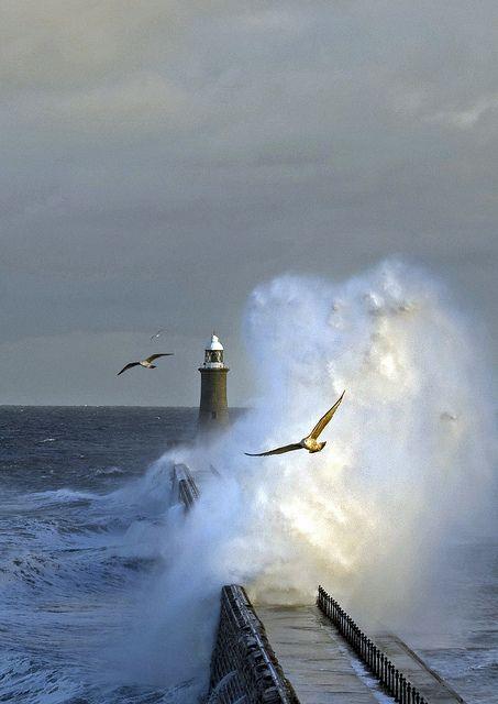 Pássaros e tempestade. Vista a partir do cais.  Fotografia: Bill Fell no Flickr.