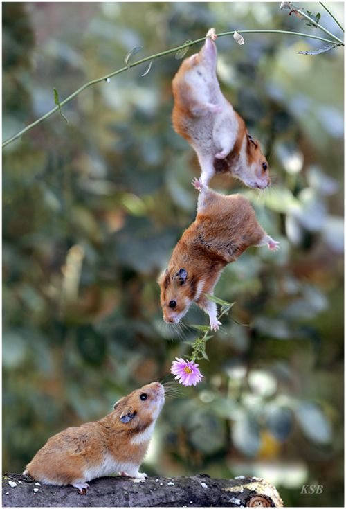 Mice give flowers