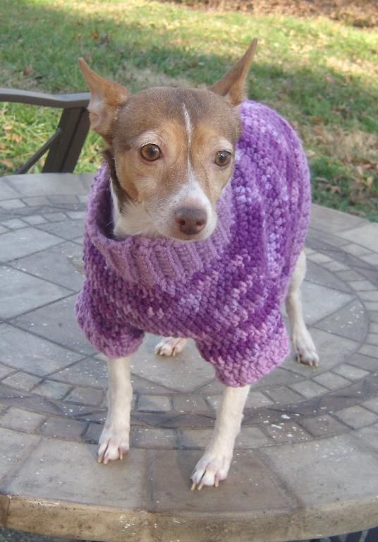 Douglas Dog Knitting Pattern : Multi-color Dog Sweater free crochet Pinterest Crocheting, Inspiration ...