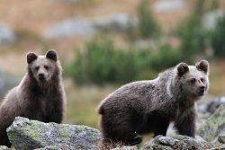 Remember, bear... is not a teddy bear.