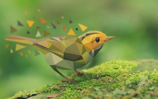 Vector bird illustration process http://www.behance.net/gallery/Bird-vector/8404315