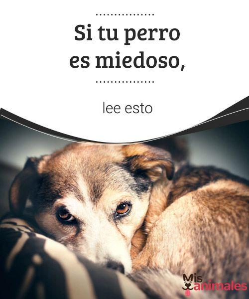 Si tu perro es miedoso, lee esto Si tu perro es miedoso, ayúdalo a superar sus temores con paciencia y amor y nunca con castigos. No dudes en consultar al veterinario para que te aconseje. #consejos #miedo #perro #veterinario