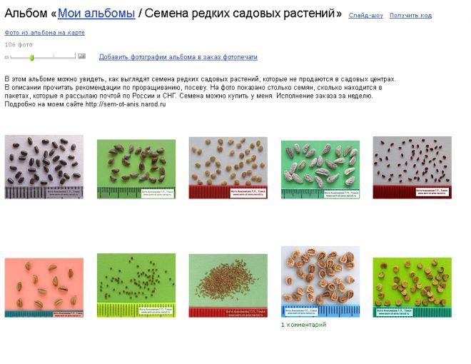 sem-ot-anis — альбом «Семена редких садовых растений» на Яндекс.Фотках