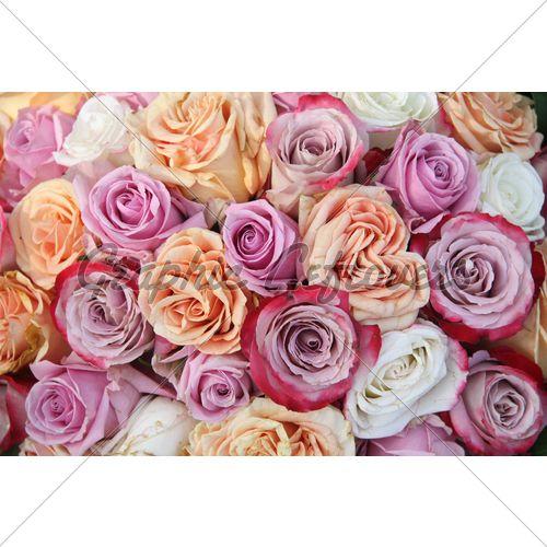 Orange And Lavender Roses Purple Rose Arrangement Gl Stock Images
