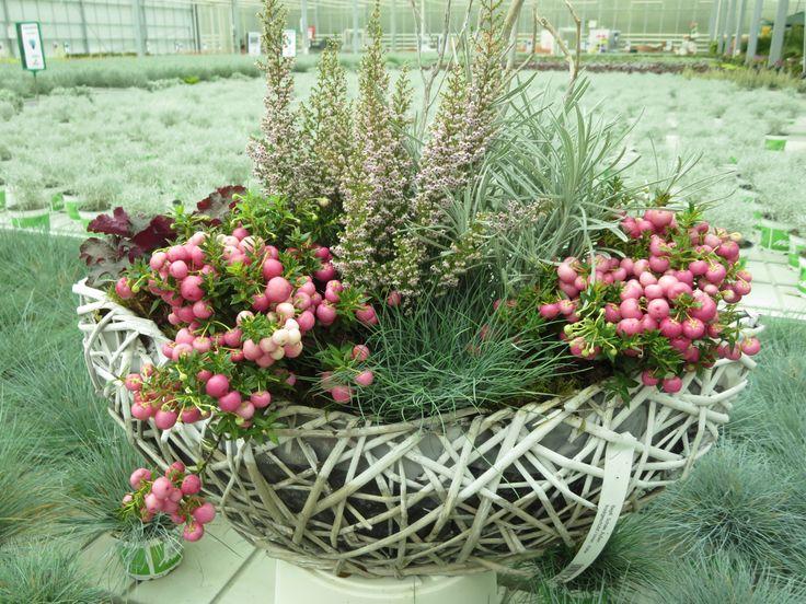 Bildergebnis f r herbstliche k belbepflanzung for Herbstliche gartendeko