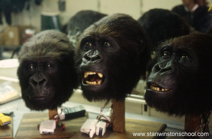 Check out our NEW #behindthescenes #blog! Congo's lifelike #animatronic #gorilla suits at #stanwinstonstudio. LINK IN BIO!