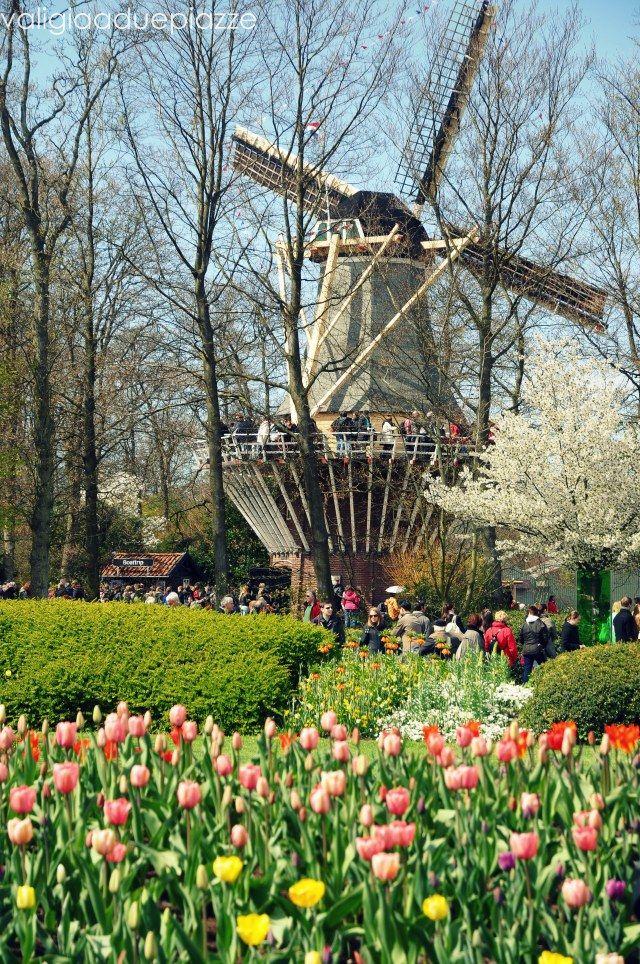 Olanda, mulino a vento