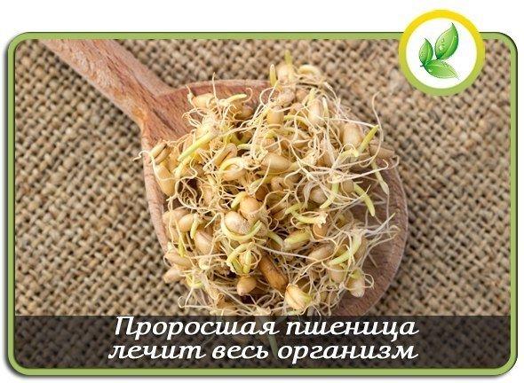 Проросшая пшеница лечит весь организм