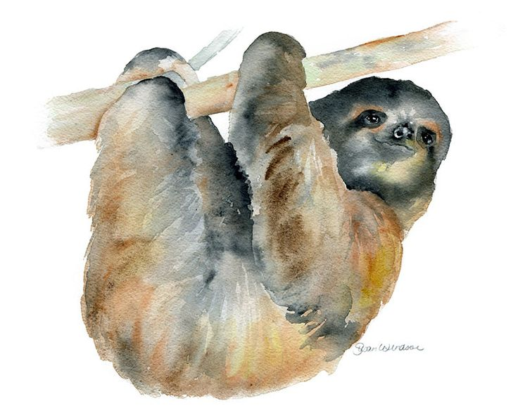 Slothwatercolor giclée reproduction.Landscape/horizontalorientation. Printed on fine art paper using archival pigment inks. This quality printing allows over