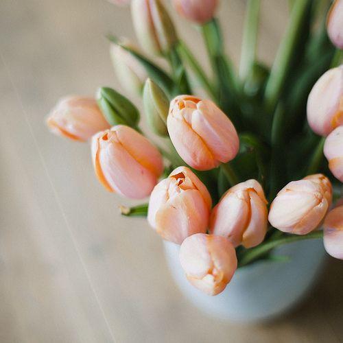 Peach Tulips - Spring